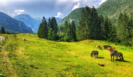 Horses with the mountains of Triglav National Park in the background