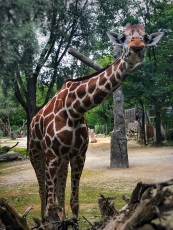 Hellabrun Zoo, Munich
