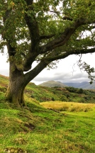 There weren't many trees up on the hills so this one stood out!