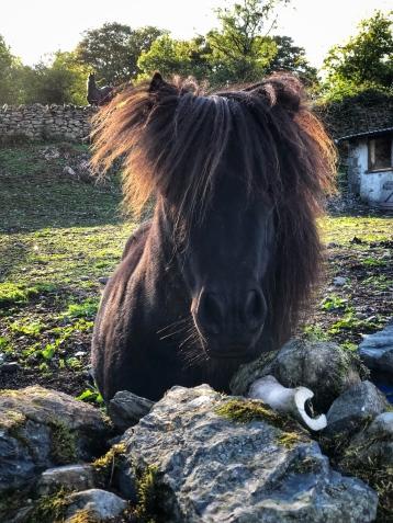 A pony near the house