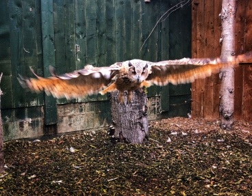 We watched this owl hunt!